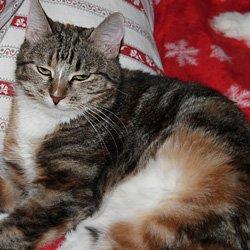 Кошки и котята в добрые руки
