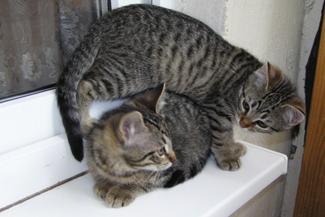 табби фото кошки