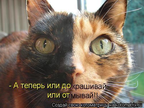 Стихи смешные о котах и кошек