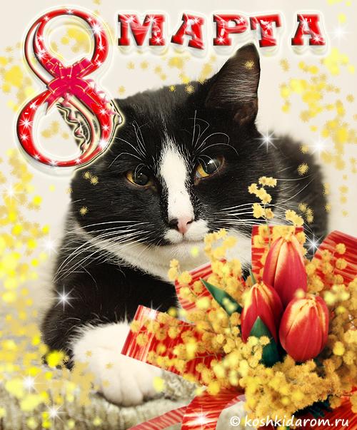 качества с восьмым марта картинки с котятами предыдущем