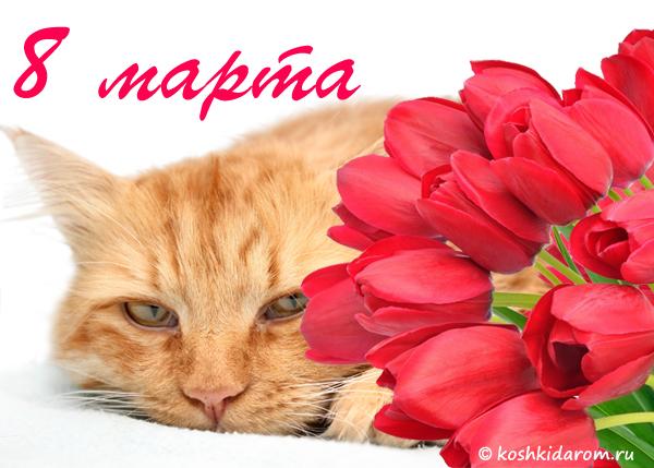 Открытка кот с 8 марта