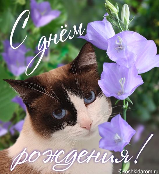 Картинки с днем рождения женщине с котами