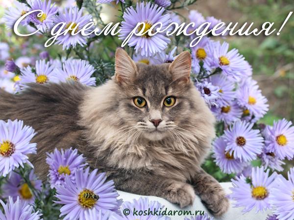 аллергия на кошек форум