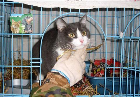 Справка для перевозки животных Гольяново Справка в ГАИ 003 в у Нагатино-Садовники