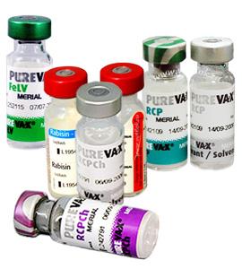 Вакцины от лишая у котов