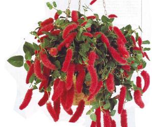 Ядовитые растения и цветы для кошек 83