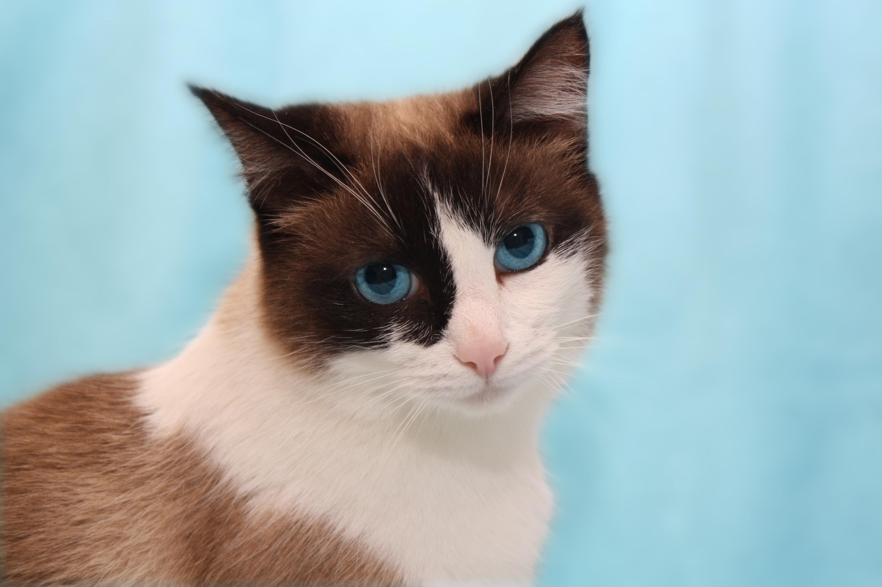 аллергия на кошку фото сыпи